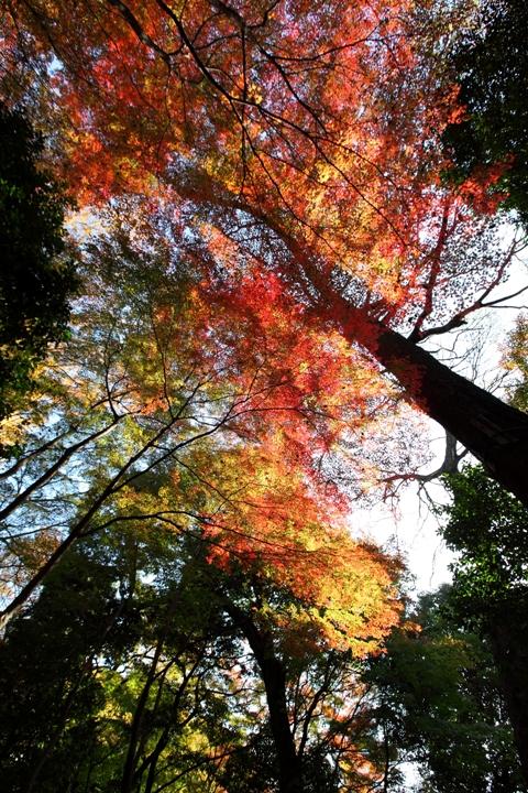 koishikawa_0017fu.jpg