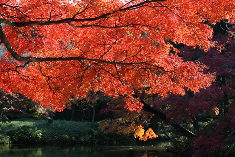 koishikawa_0020fu.jpg