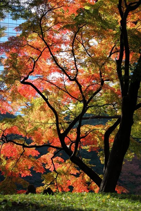 koishikawa_0024fu.jpg