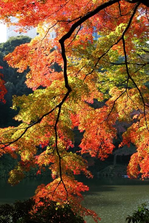 koishikawa_0025fu.jpg