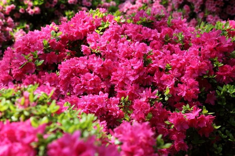 nezu-jinjya_0033f.jpg