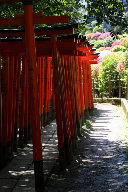 nezu-jinjya_0037f.jpg