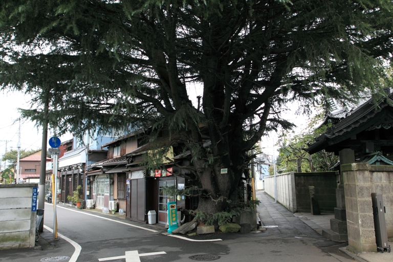 nezu-sansaku_0035fu.jpg