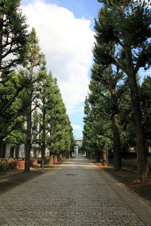 shimokita-sansaku_0005fu.jpg