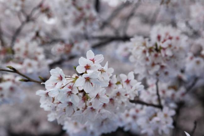 shinjuku-gyoen0009FU_convert_20100416234808.jpg