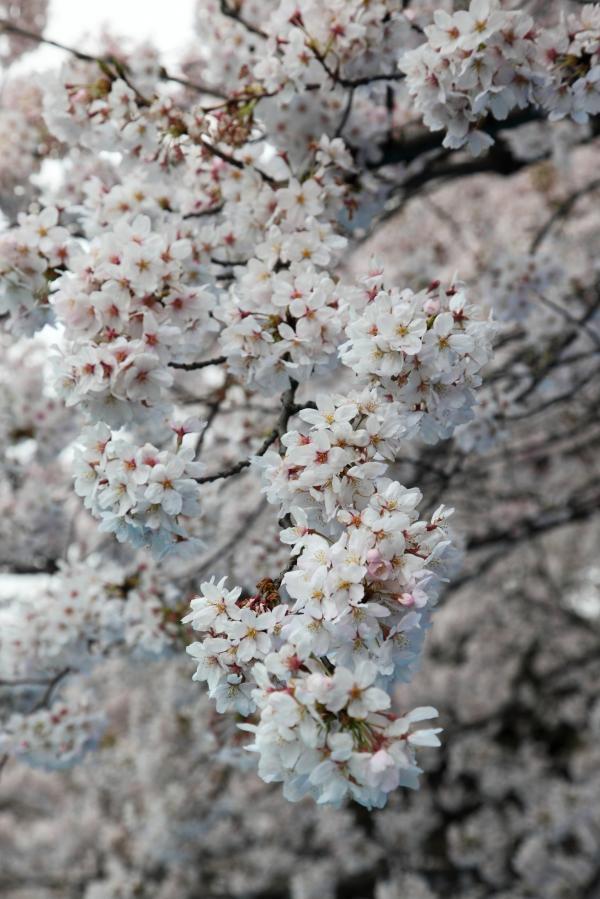 shinjuku-gyoen0010FU_convert_20100416234911.jpg