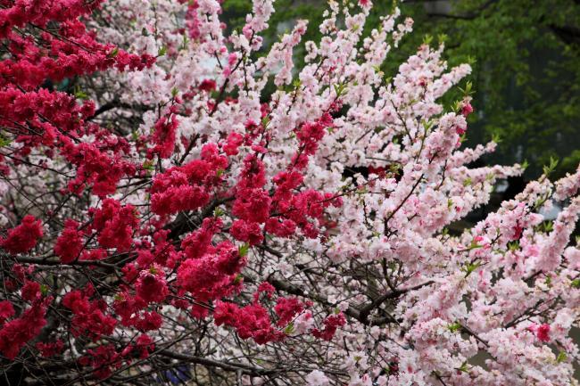 shinjuku-gyoen0028FU_convert_20100416235018.jpg