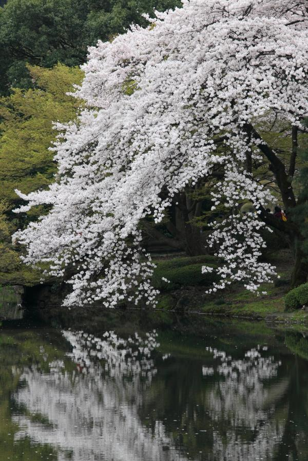 shinjuku-gyoen0058FU_convert_20100416235351.jpg