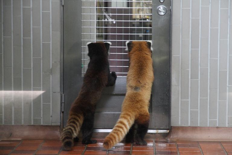 ueno-zoo_0002fu.jpg