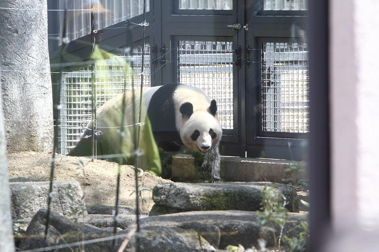 ueno-zoo_0006f.jpg