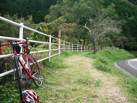 小柿渓谷 古桜の木