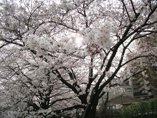 2011_0407AA.jpg