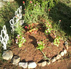 20120923赤花壇