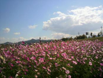 20121024花公園