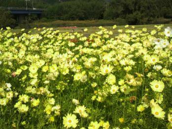 20121024花公園4