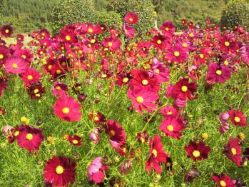 20121024花公園5