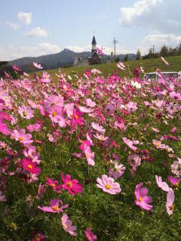 20121024花公園6