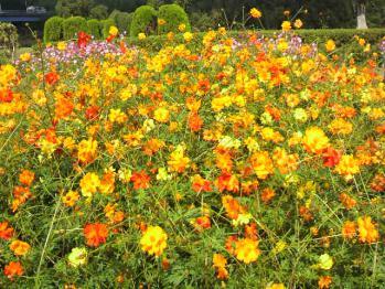 20121024花公園7