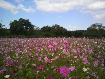 20121024花公園8