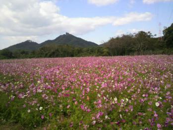 20121024花公園9