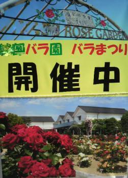 20101025バラ園~~~♪