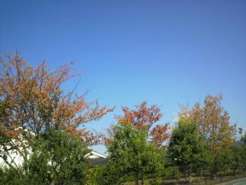 20101025バラ園~~~♪の横の紅葉