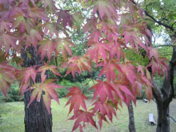 20121029紅葉
