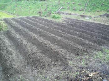 20121110畑2