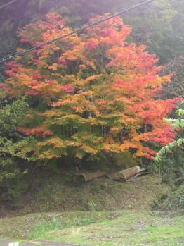 20121110紅葉