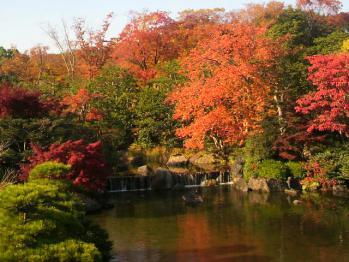 20121112万博公園紅葉