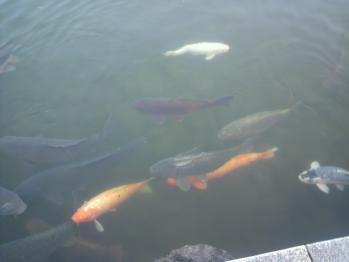 20121112万博公園こい
