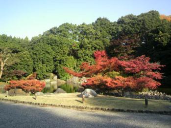20121112万博公園紅葉6