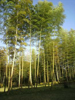 20121112万博公園紅葉7
