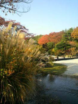 20121112万博公園紅葉8
