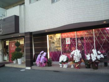 20121112マダムシンコ