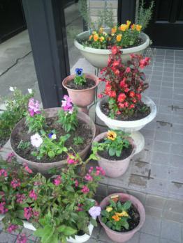 20121114玄関の前の花~♪2