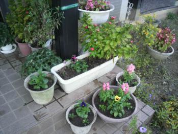 20121114玄関の前の花~♪