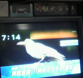 20121121白いカラス