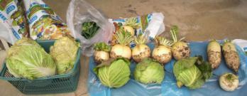 20130124野菜~♪2