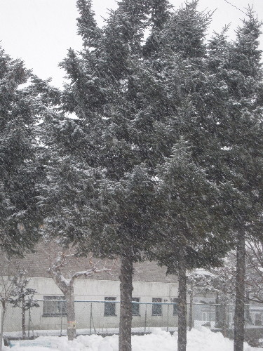 snowmorning0001.jpg
