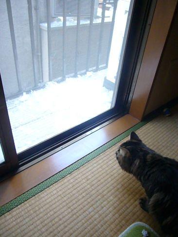 雪ですよ!