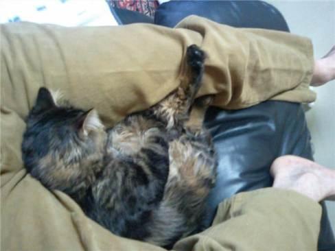 くっつき猫