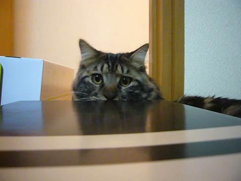 猫のレゴブロック