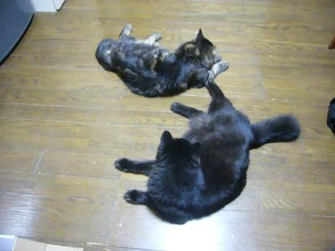 群れを作る猫