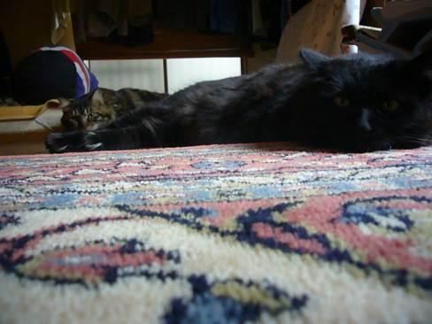 うちには猫が2匹
