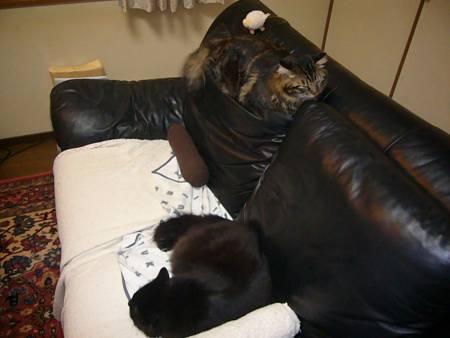 ぬくぬくソファ