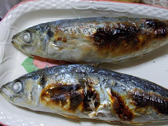 Aji fish 20141110-2