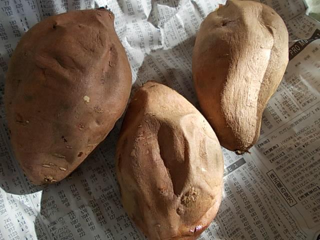 Annou sweet potato 20141115