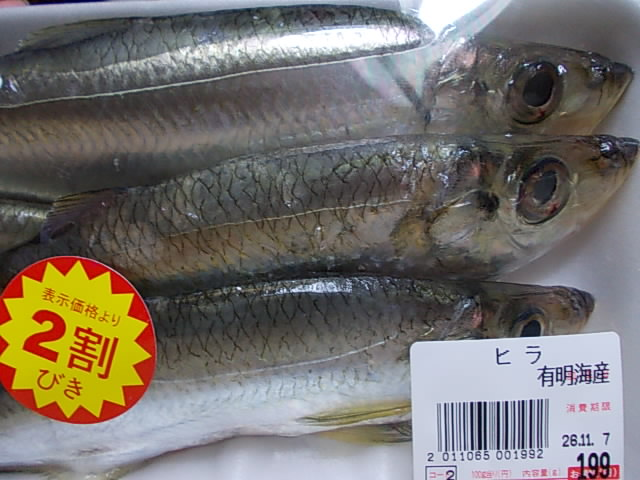 Hira fish 20141106