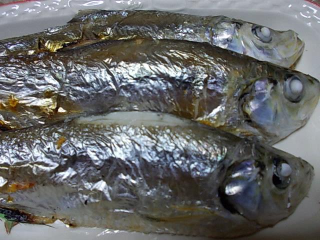 Hira fish 20141106-2